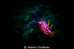 nudibranch by Vladimir Chubenko
